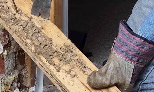 Termite inspection service